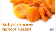 Baby's creamy apricot dessert