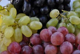 Grapes baby food