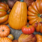 Baby Food Recipes for Thanksgiving
